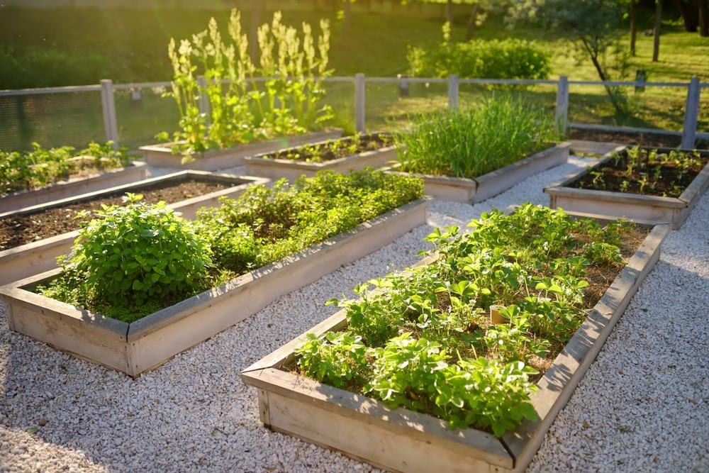 Benefits of Elevated Gardening Beds and How to Build Your Own